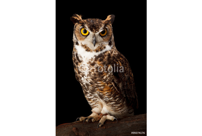 Art painting Great Horned Owl 64239