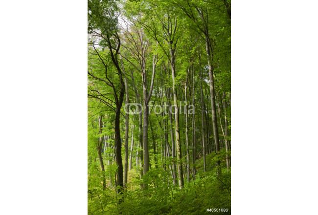 Bild Auf Leinwand Waldlichtung Die Originellen Wohndekorationen