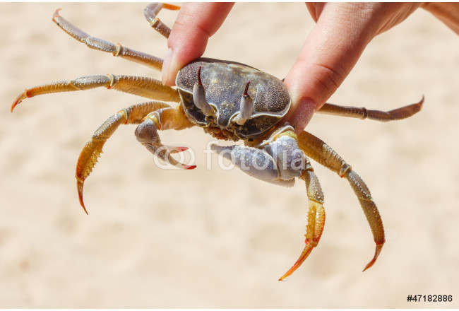 Painting marine crab  on a background of sand 64239