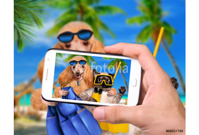 Hands taking photo dog with cat diver with smartphone 64239