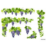 A set of bunches of blue grapes. Cluster of berries, branches and leaves. Vector illustration. 64239