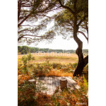 landscape view with pine trees 64239