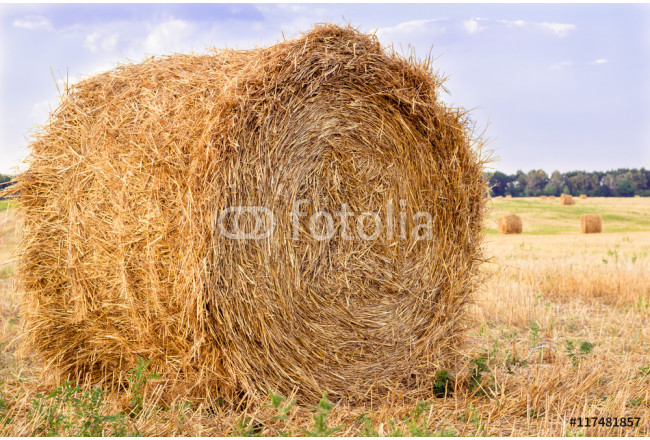 Obraz nowoczesny Dry hay stacks on countryside field during harvest time 64239