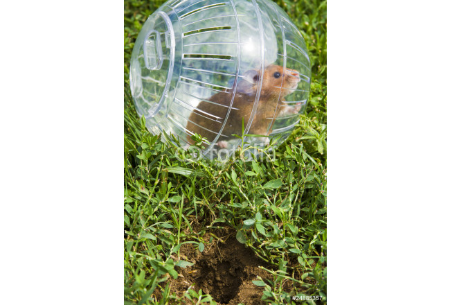 Rodent in a hamster ball wanting to go down gopher hole. 64239