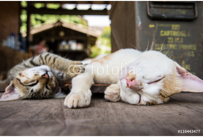 two Cat sleeping on the wood ground 64239