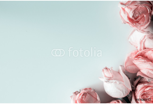 Pastel roses in soft blue background 64239