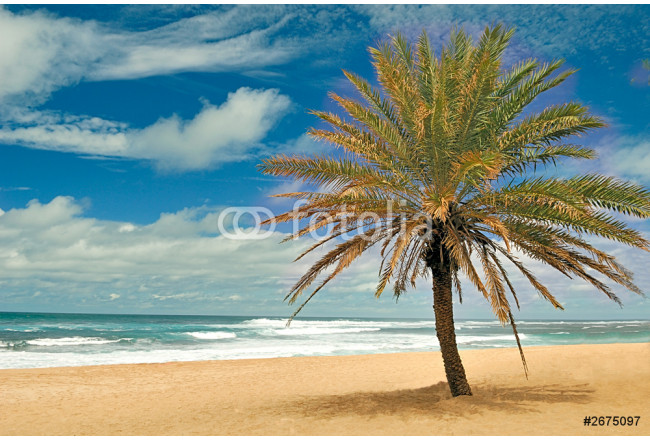 Obraz nowoczesny sunset beach mini palm tree 64239