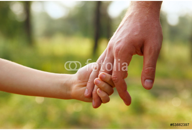 father's hand lead his child son in summer forest nature outdoor 64239