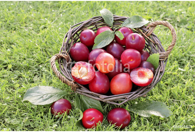 Red plums in basket on green grass  64239