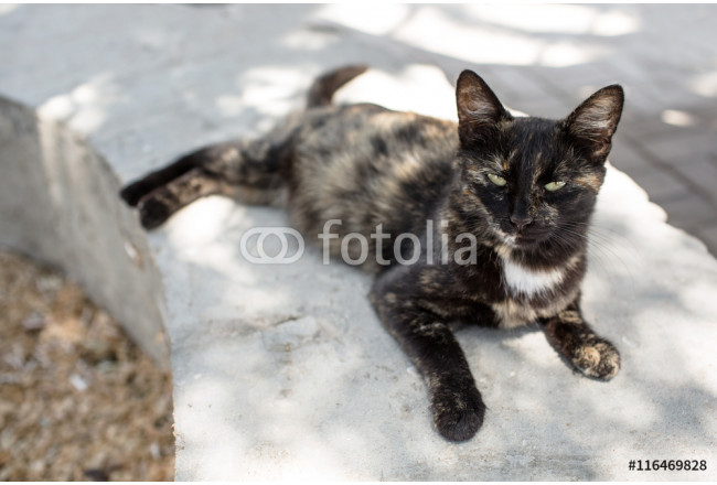 Obraz nowoczesny Cat lying on the street and looks 64239