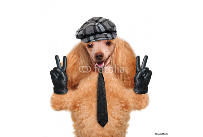 dog with peace fingers in black leather gloves 64239