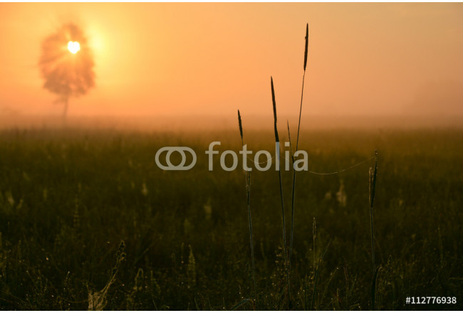 sunrise and golden hour on fields 64239