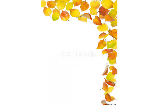 Apricot autumn falling leaves on white background. 64239