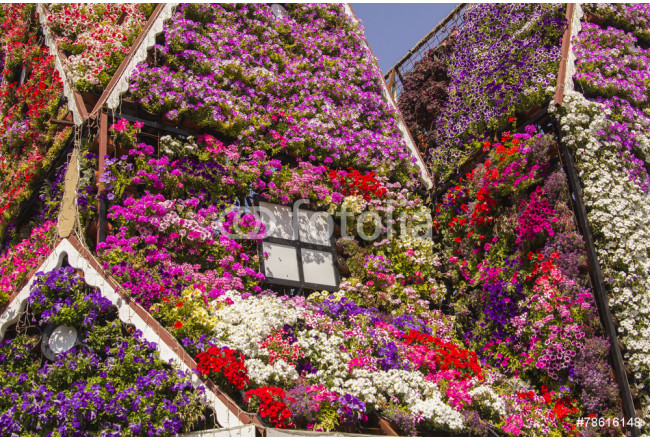 House of colorful flowers petunias in Miracle Garden 64239