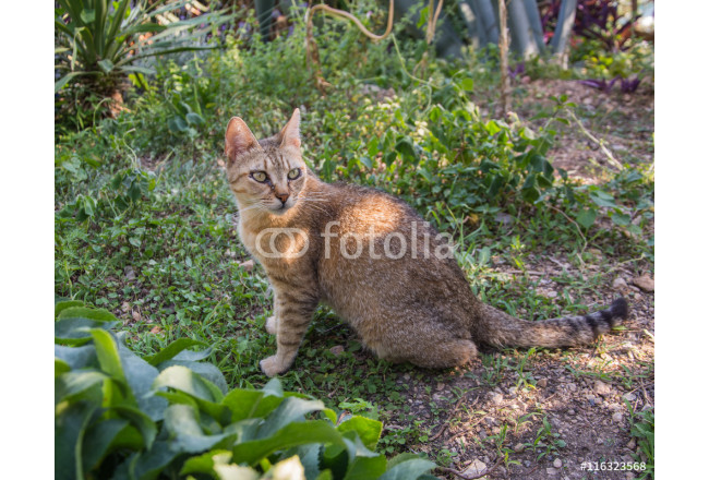 cat in colorful garden. pets 64239
