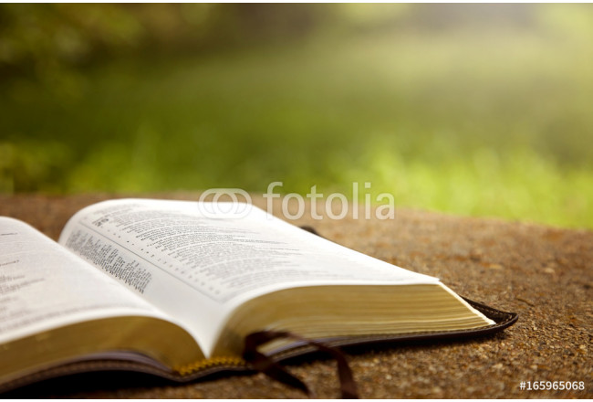 An Opened Bible on a Table in a Green Garden 64239