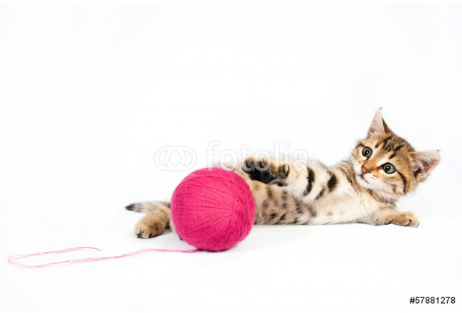 Tabby kitten playing with a ball of yarn 64239