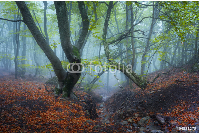 Trail through a mysterious dark old forest in fog. Autumn 64239