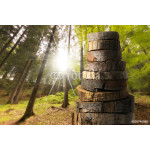Wooden Logs with Forest on Background 64239