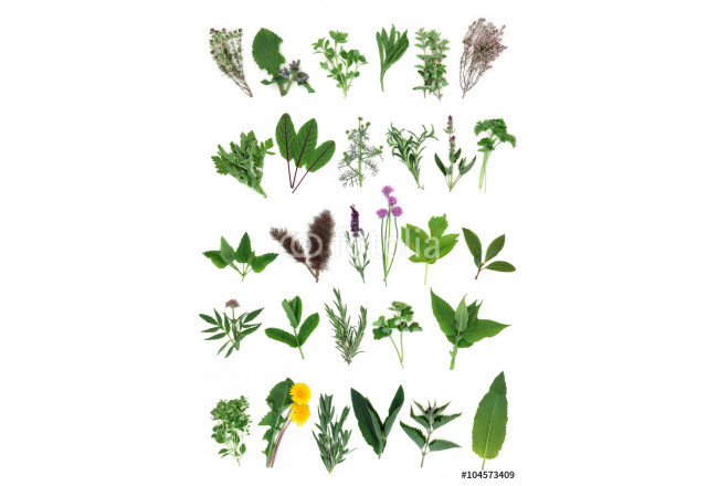 Fresh Herb Selection 64239