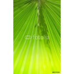 green palm leaf 64239