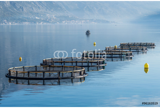 Cages for fish farming 64239