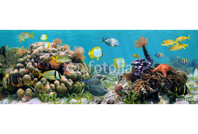 Panoramic reef 64239