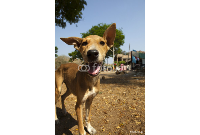 Cuadro decorativo Cute dog with tongue out. 64239