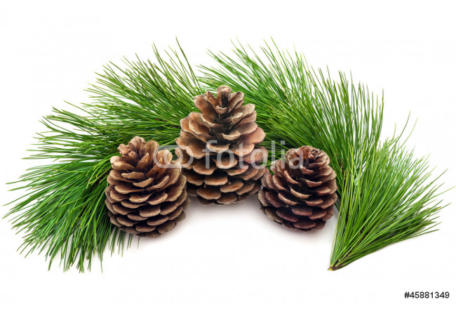 Three cones with green branches on a white background 64239
