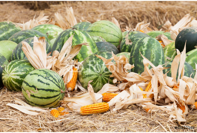 Watermelon and dry corn on a pile of straw. 64239