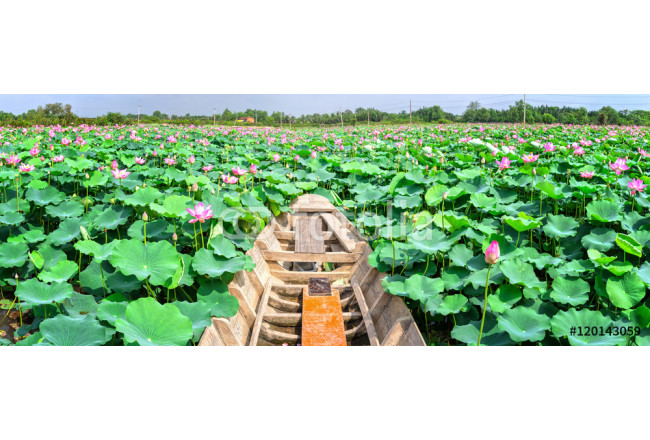 Bild auf Leinwand The boat toward beautiful lotus blooming fields and fragrant frozen marshland around idyllic beauty created only in rural Vietnam 64239