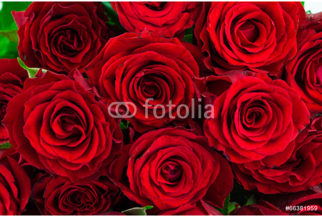 bouquet of red roses as a background 64239