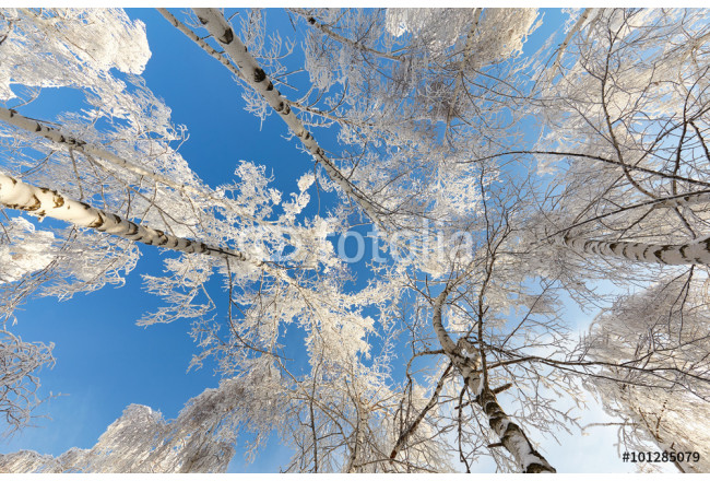 Beautiful winter forest in the bright sunny day - a photo 12 64239