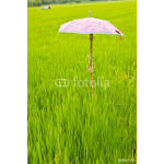 Umbrella on rice field 64239
