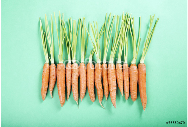 fresh organic carrots in a row on the green background 64239