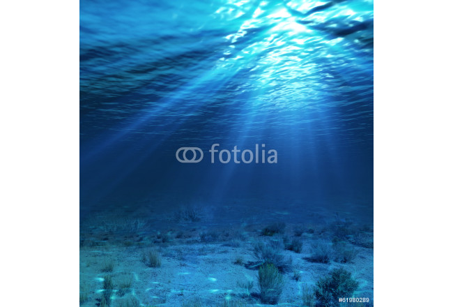 underwater landscape and backdrop with algae 64239
